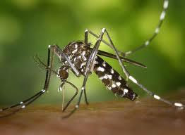 Serra realiza ações contra a dengue durante a pandemia