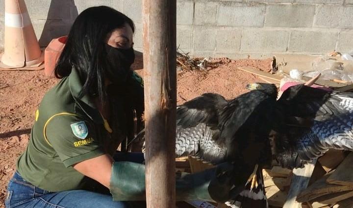Fiscalização Ambiental da Serra resgata gavião em empresa privada