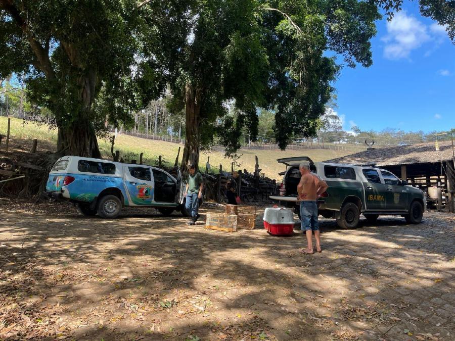 Fiscalização Ambiental da Serra devolve 150 pássaros e tamanduá à natureza