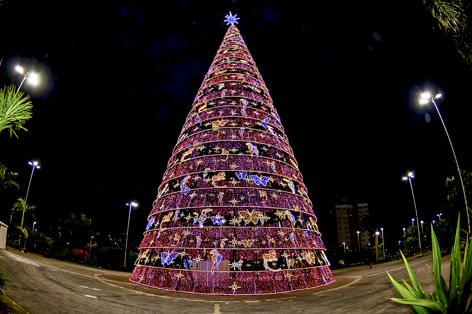Árvore de Natal - Parque da Cidade
