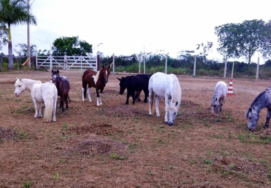Secretaria de Agricultura da Serra prepara festa para produtor e trabalhador rural